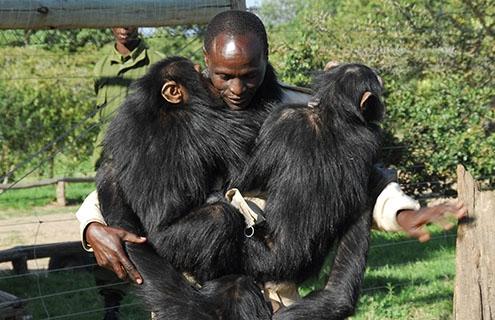 chimpanze trekking at aberdare national park